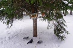 Capezzolo nell'alimentatore e piccioni nell'inverno fotografia stock