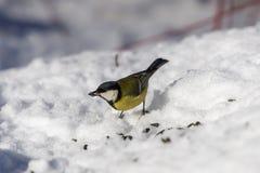 Capezzolo nell'inverno fotografie stock