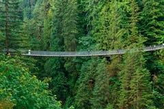 Capilano-Hängebrücke stockbild