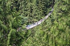 Capilano Suspension Bridge royalty free stock photos
