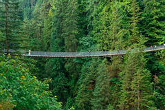Capilano Suspension Bridge Stock Image