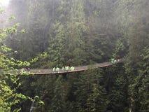 Capilano upphängningbro bland träden, Vancouver, Kanada royaltyfria bilder