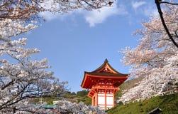 Capilla con el flor de cereza Imagen de archivo libre de regalías