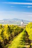 Capilla con el viñedo cerca de Velke Bilovice Fotografía de archivo
