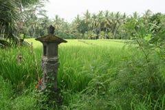 Capilla en el campo del arroz, Bali Foto de archivo