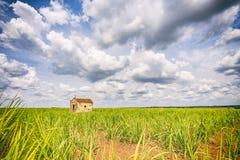 Capilla vieja abandonada dentro de una plantación de la caña de azúcar en el Brasil Fotos de archivo