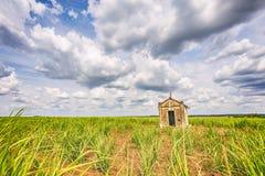 Capilla vieja abandonada dentro de una plantación de la caña de azúcar en el Brasil Imágenes de archivo libres de regalías