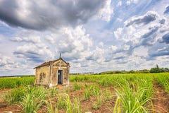 Capilla vieja abandonada dentro de una plantación de la caña de azúcar en el Brasil Imagenes de archivo