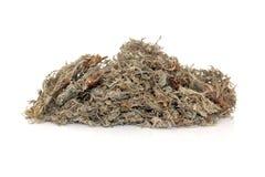 Capillaries Herb Stock Photo