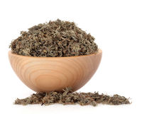 Capillaries Herb Stock Photography