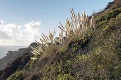 Capim-dos-pampas, angra de Bixby Foto de Stock Royalty Free