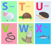 Alphabet for Children with Animal Illustrations. Capital letters S, T, U, V, W, X as part of alphabet vector. Fluffy sheep, sea turtle, cute urchin, dangerous Stock Illustration