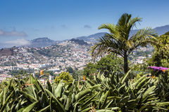 The capital of Madeira Island - Funchal city Royalty Free Stock Photo