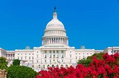 Capitol που χτίζει τα ρόδινα λουλούδια ΗΠΑ του Washington DC Στοκ Εικόνα