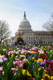 Capitol Building, Washington DC Royalty Free Stock Photo