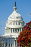 Capitol building in Washington DC. With fall colors Royalty Free Stock Photo