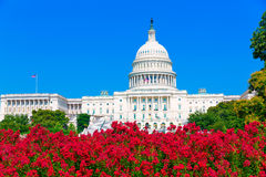 Capitol building Washington DC pink flowers USA Royalty Free Stock Photography