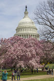Capitol Hill bij de Lente Stock Afbeeldingen