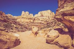 Capitol Reef Grand Wash Stock Image