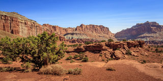 Capitol Reef Nat'l Park in Utah. High desert cliffs and hardy trees Royalty Free Stock Images