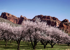 Capitol Reef National Park Royalty Free Stock Photo