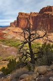 Capitol Reef National Park. Located in south-central Utah, Capitol Reef National Park is a hidden treasure filled with cliffs, canyons, domes and bridges in the stock images