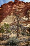 Capitol Reef National Park is in Utah`s southern desert. T surrounds a long wrinkle in the earth known as the Waterpocket Fold, with layers of golden sandstone royalty free stock image