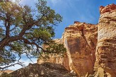 Capitol Reef National Park is in Utah`s southern desert. T surrounds a long wrinkle in the earth known as the Waterpocket Fold, with layers of golden sandstone stock photos