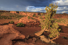 Capitol Reef National Park Stock Image