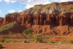 Capitol Reef tree and rock formations 3 Royalty Free Stock Image
