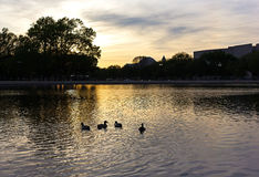 The Capitol Reflecting pool at sunset in Washington DC, USA. Royalty Free Stock Images