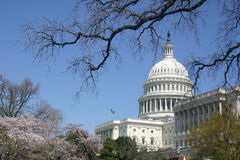 Capitol from south angle. Washington, dc. national capitol from south angle with trees Stock Image