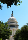 Capitol Trees Royalty Free Stock Images