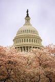 The Capitol in Washington Stock Image