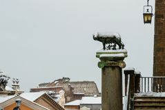 Capitoline Wolf symbol of Rome with snow stock image