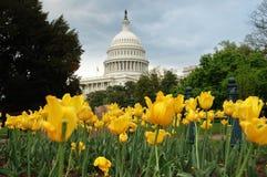 Capitolio de Estados Unidos en Washington DC con amarillo Imagen de archivo libre de regalías