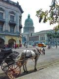 Caballo al Capitolio. Capitolio havana caballo royalty free stock photo