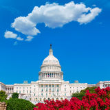 Capitool de roze bloemen de V.S. van het de bouwwashington dc Stock Foto's