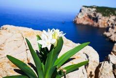 Capo Caccia photo libre de droits