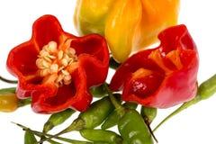 Capo y pimientas de chile verdes Imagen de archivo libre de regalías