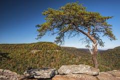Capoeira dos busardos sobre o olhar no parque estadual das quedas da angra da queda Imagem de Stock Royalty Free