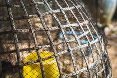 Capoeira para a textura da galinha com contraste alto Imagem de Stock