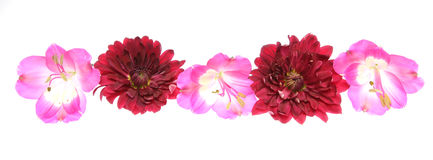 Capolino di alstroemeria e del crisantemo Immagine Stock Libera da Diritti