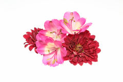 Capolino di alstroemeria e del crisantemo Fotografie Stock