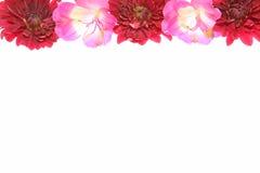 Capolino di alstroemeria e del crisantemo Fotografia Stock
