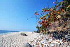 Capones海岛 图库摄影
