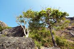 Capones-Insel Stockbild