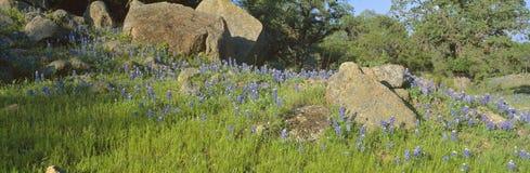 Capos azules en país de la colina Fotografía de archivo libre de regalías