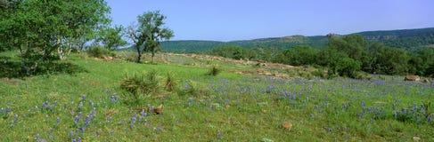 Capots bleus dans le pays de colline, Willow City Loop Road, le Texas photographie stock
