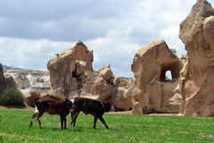 Cappadocia grottor royaltyfri fotografi